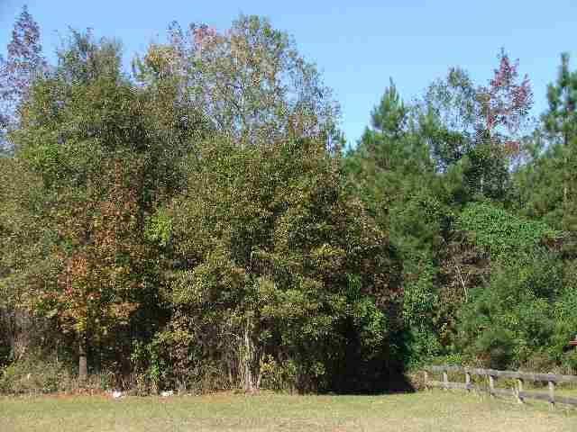 EXTREMELY NICE LOT W/ CONVENIENT, DIRECT ACCESS TO HWY 521. JUST MINS. WEST OF GEORGETOWN. EXCELLENT RESIDENTIAL/COMMERCIAL  DEVELOPMENT POTENTIAL.     ONE OF THE LARGEST LOTS CURRENTLY LISTED IN THIS PARTICULAR AREA - OWNER IS BROKER