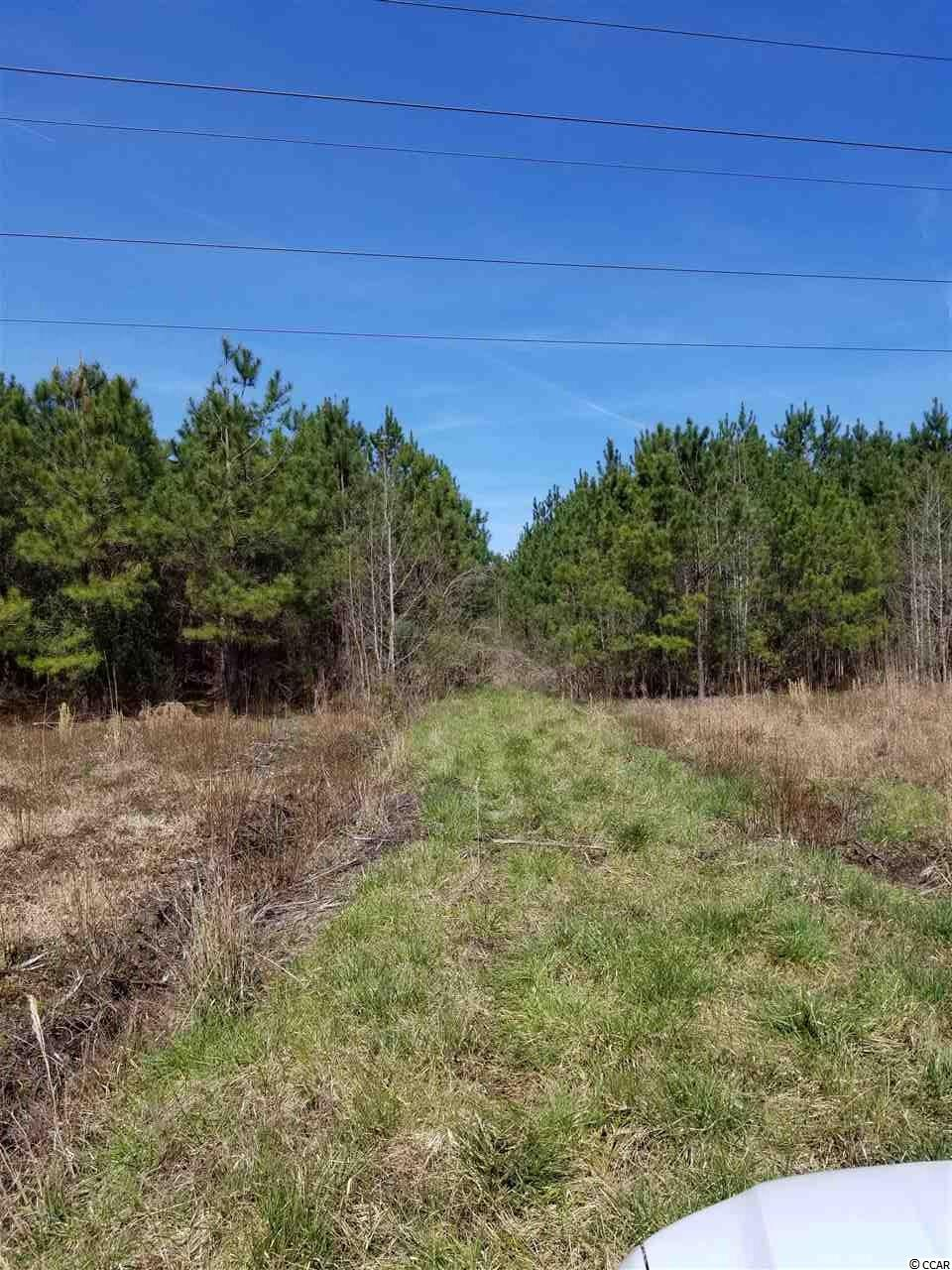 43.5 acres with approximately 10 year old pines