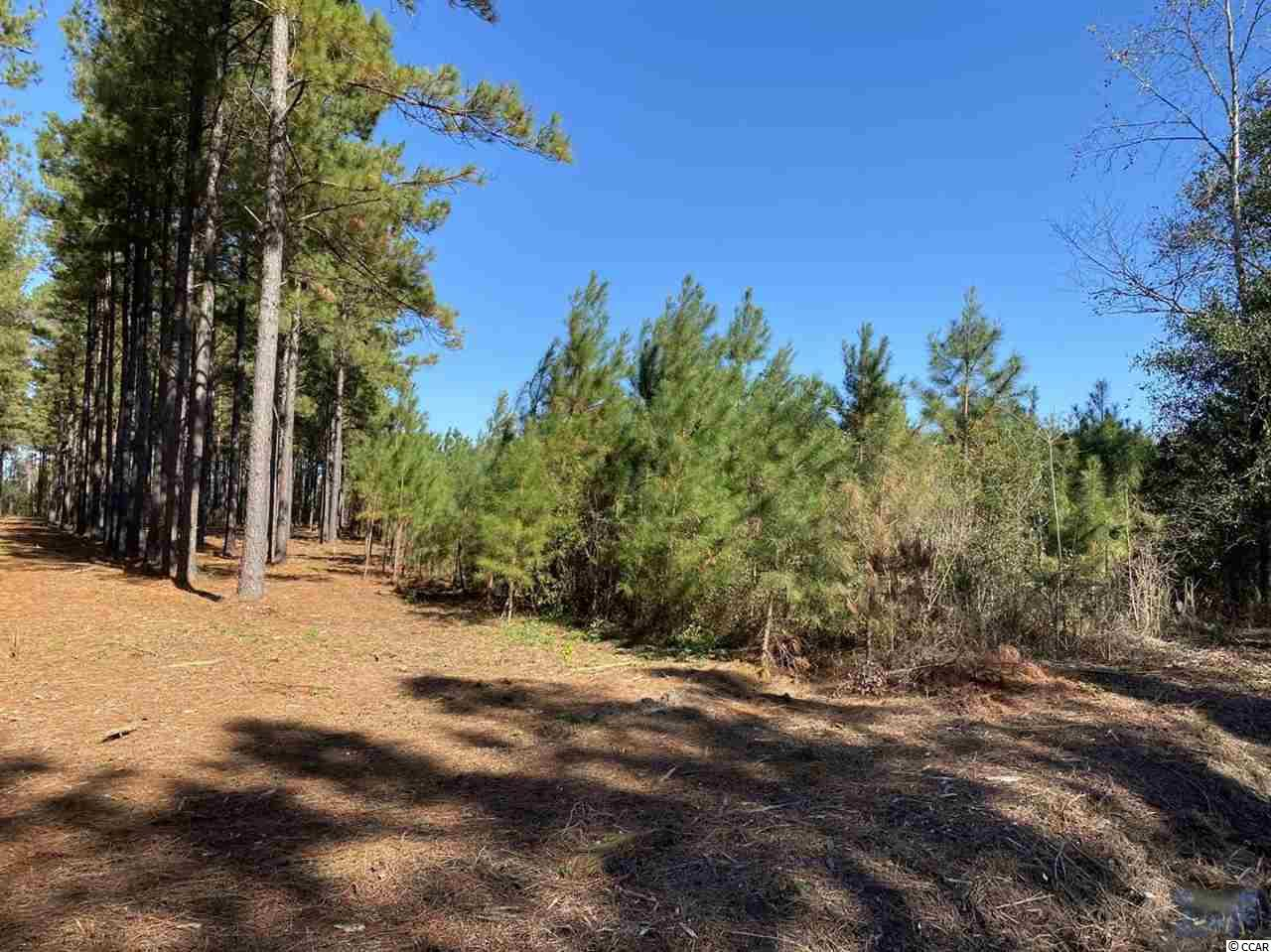 Beautiful 13.85 acre tract mostly covered with small pines- Endless possiblities- Public water available- Public sewer with 4700 feet- located close proximity to Hwy 22 and access to north end of Myrtle Beach.