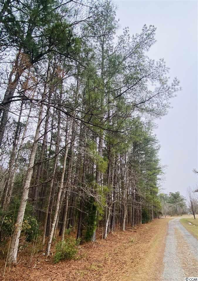 Here is your opportunity to own 4.85 acres of prime country living! This lot is located in the community of Lambertown. This property is approximately 20 minutes from Downtown Georgetown, 30 minutes to McClellanville; come out and take a look today!