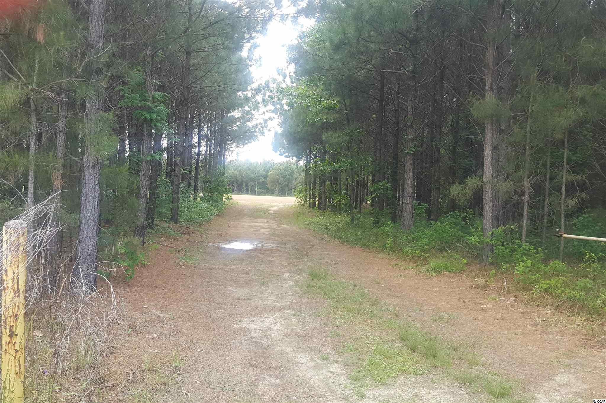 Take a look at this 31 acre property, it has 15 acres of pine trees planted about 10 year ago which will be a great investment in the future.  It's a great place to find turkeys and deer for the hunter in your family or just to watch them roam around.  It's such a peaceful place just waiting on you to enjoy.