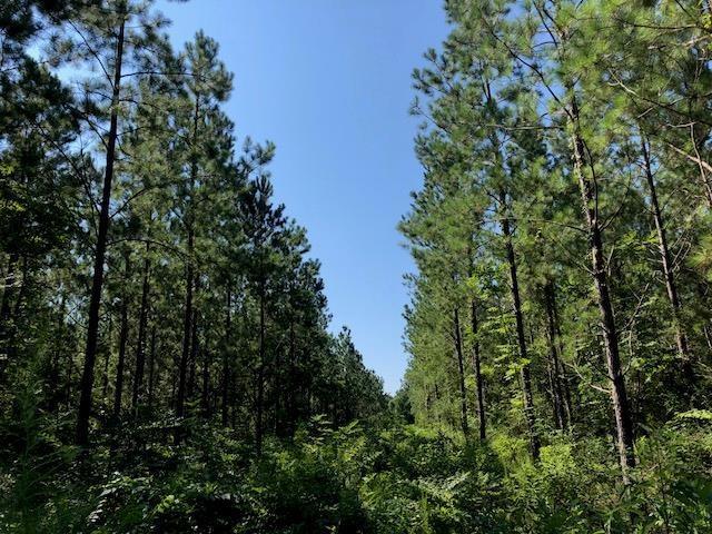 Land for Active at 17598 CARTER Road Bogalusa, Louisiana 70427 United States