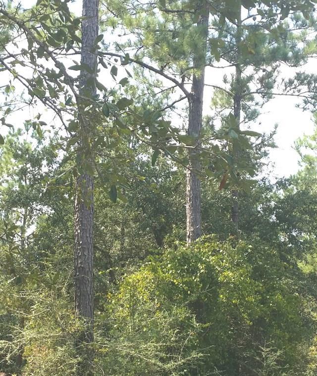 Terreno por un Venta en OLD HWY 24 EXT McComb, Mississippi 39648 Estados Unidos