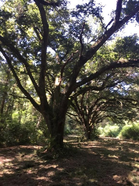 Land for Active at NEAL ACRES Road Loranger, Louisiana 70446 United States
