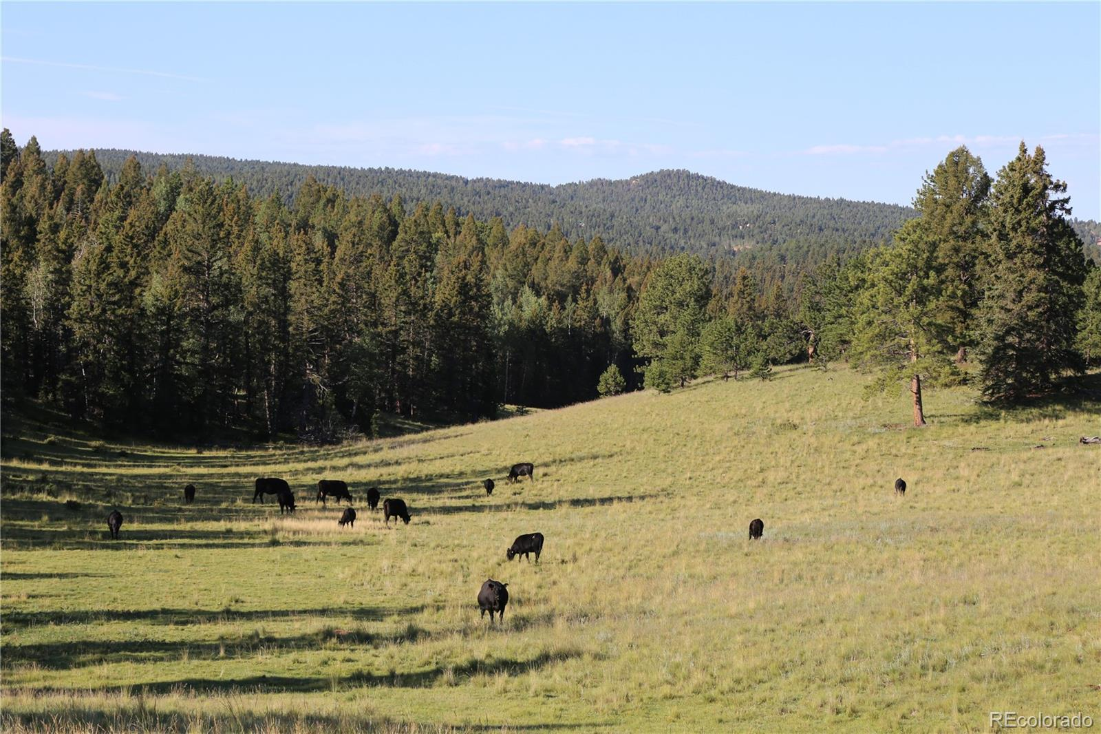 1803 acre Ute Pass Ranch north portion borders Hwy 24 on the south and County 51 on the north. Lake and Pikes Peak views, varied terrain. Historically used for cattle grazing and hunting lease, this property has a resident elk herd. Potential for a future conservation easement.