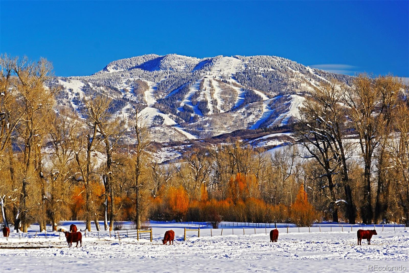 Photo of 25740  26185 US Highway 40, Steamboat Springs, CO 80487