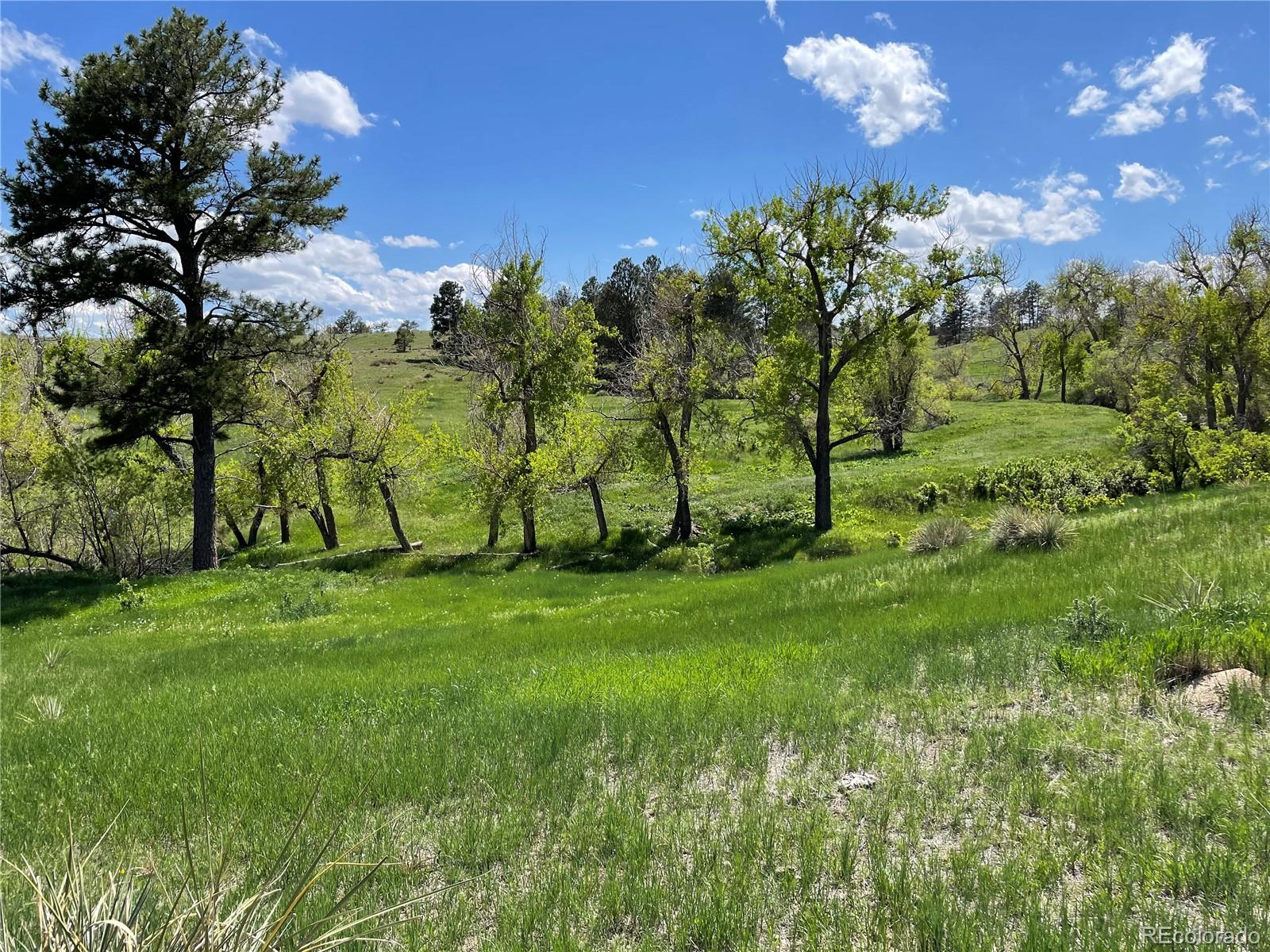 Nice, beautiful Ranch consisting of 858 Acres. Some feed could be produced on the ranch for livestock. Water available for livestock, horses, etc. 30% + of the ranch is healthy Pine trees. Great building sites for a dream home on a nice Ranch. Has been in the same family since 1932. Lots of wildlife on the Ranch. Property could be divided to sell of a portion to minimize investment and have a secluded home on a portion of the Ranch.