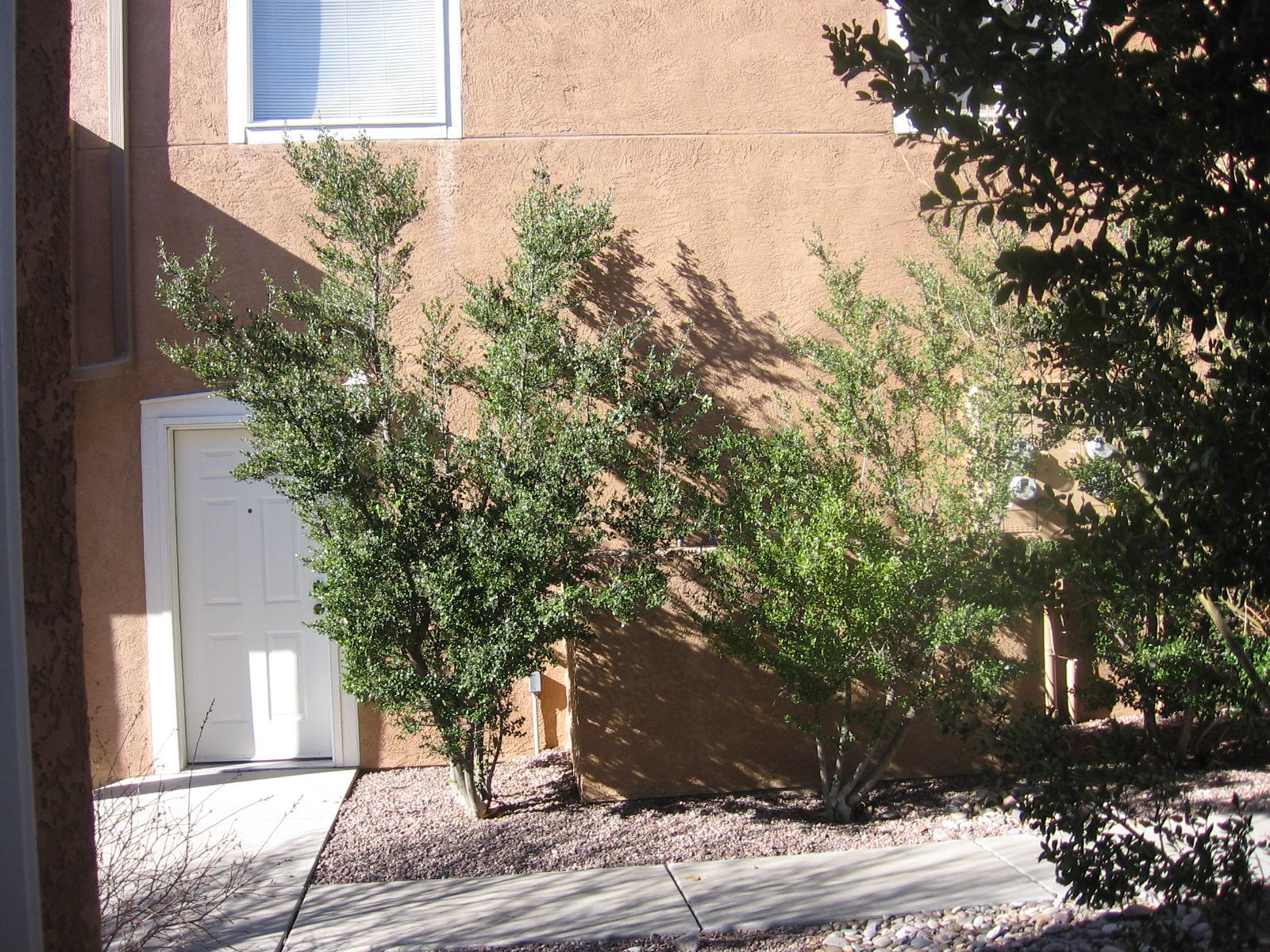 Exceptional condo with bamboo floors throughout and tile in the 2 bathrooms. New appliances, newly painted and in top condition.  2 bedrooms, 2 baths, ceiling fans,  skylights, big walk-in closet, balcony, attached garage.  And only 2 blocks from NMT campus.  Even the exterior door is new and the brushed chrome door hardware is gorgeous!