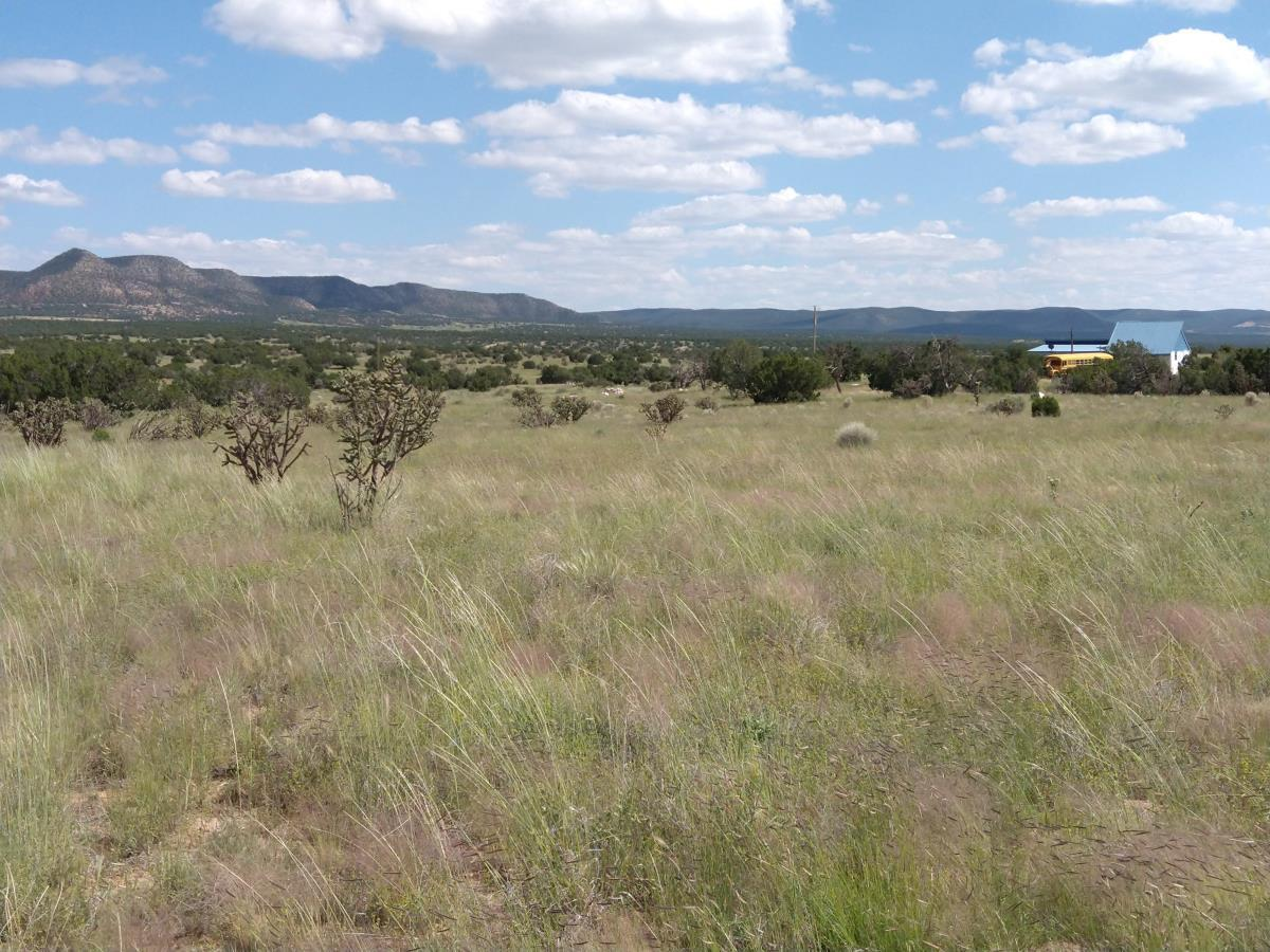 Custom Home set on the mesa facing South with two private canyons and 29+ Acres and amazing views. Many updates including new septic, plumbing, paint, driveway, and cactus removal from off the property. Home is well built with a nice metal roof and proper insulation. Spacious layout and plenty of room to roam. Large living room, kitchen, dining and large master bedroom. Can add on extra rooms or enjoy the property as it is. Solitude living not far from the Town of Mountainair with lots of quiet and bright beautiful stars to enjoy at night. This is New Mexico High Desert living at its best.